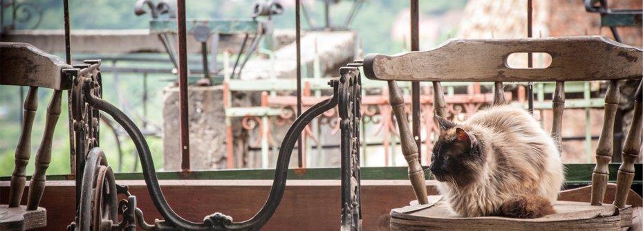 fabricant de fenetres - photo David Marcu